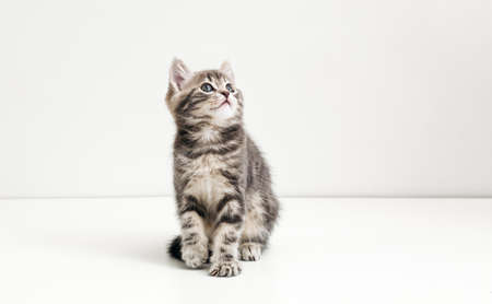 Cute gray cat kid animal with interested, question facial face expression look side on copy space. Small tabby kitten on white background. Banco de Imagens