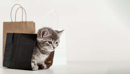 Small tabby kitten is hiding in paper shopping bag. Gift for woman on valentine day kitten in package surprise. Sale purchase concept. Cat in delivery bags. Long web banner with copy space. Banco de Imagens