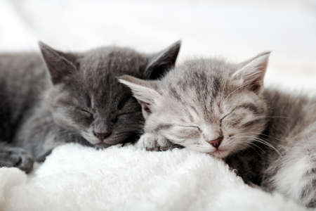 Couple happy kittens sleep relax together. Kitten family in love. Adorable kitty noses for Valentine s Day. Cozy home animal sleeping comfortably