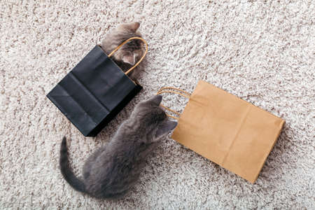 Adorable small tabby kittens are hiding in paper shopping bags at home on carpet. Cat looks out of paper bag. Gift on valentine day kitten in package surprise. Sale purchase concept. Top view Banco de Imagens