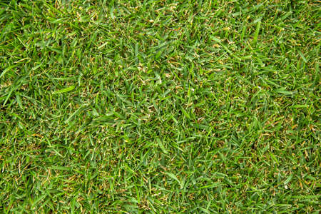 Fresh cutted grass. Nature texture background. Green grass lawn on the field. Green lawn pattern.