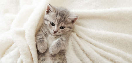 Cute tabby kitten lies on white soft blanket. Cat rest napping on bed. Comfortable pet sleeping in cozy home. Top view Long web banner with copy space.