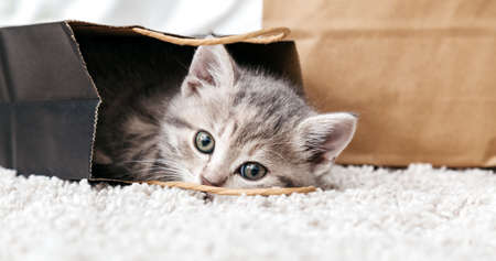 Adorable small tabby kitten is hiding in paper shopping bag. Gift for woman on valentine day kitten in package surprise. Sale purchase concept. Cat in delivery bag at home on carpet. Long web banner