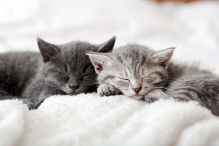 Kitten family in love portrait. Adorable kitty noses for Valentine Day pet love. Couple happy kittens sleep relax together. Cozy home animal sleeping comfortably have sweet dreams. Banco de Imagens