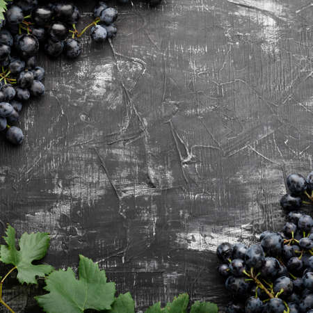 Black juicy grapes on vintage dark concrete background. Frame made of grapes. Copy space for text or menu on black scuffed background. square crop