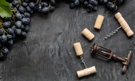 Many different corkscrews with open wine corks on dark concrete background in frame made of black grapes. Degustation winetasting of wines drink. Wine bar restaurant. Long web banner with copy space
