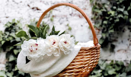 Bouquet of white peonies flowers in basket outside against white wall. Spring flowers. Cut peonies in garden. Long web banner