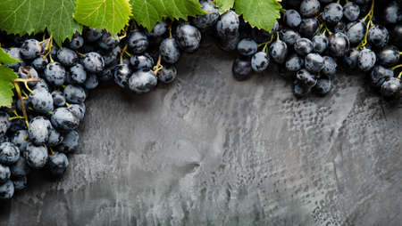 Frame made of grapes. Black juicy grapes on vintage dark concrete background. Copy space for text or menu on black scuffed background. Frame Border Long web banner Banco de Imagens