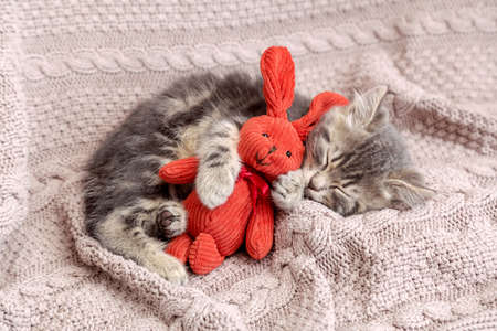 Kitten sleep on cozy blanket hug toy easter bunny. Fluffy tabby kitten snoozing comfortably with plush rabbit hare on knitted pink bed. Cat sweet dreams. Archivio Fotografico