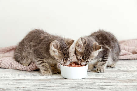 Two little tabby kittens eat food from white bowl on wooden floor. Baby cat eating junior food