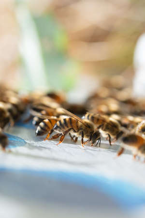 bees at work,coming back home on natural backgrpund Stock Photo