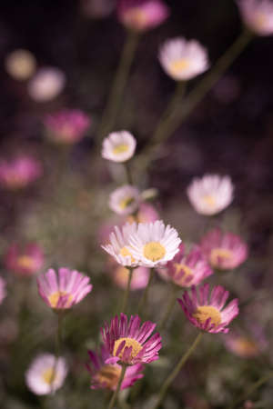 natural background of buch of multi coloured flowers Stock Photo
