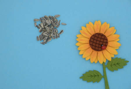 sunflower seeds and pannolence sunflower on coloured paper background