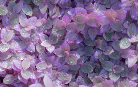 purple leaf texture. Leaf texture background Stock Photo