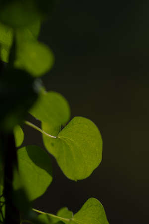 hearth shaped green leaves on black background