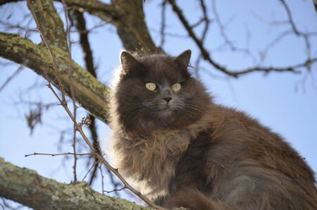 A furry, dark gray cat sits on a tree, against the blue sky. Big cat on a walk, on the street.