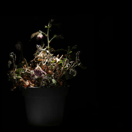A dried potted indoor flower is illuminated by a bright white light in the dark.