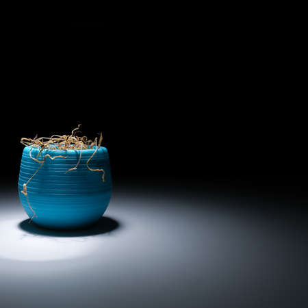 A faded flower in a blue vase on a black background. The wilted plant is illuminated with white light. A dried flower in a pot glows with light in the dark. Dry houseplant. A dead flower.