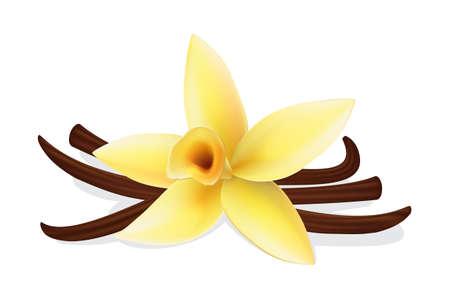 Realistische Vanilleblüte und Schoten, Vektor isolierte Objekte auf weißem Hintergrund