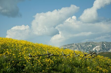 Snow on the mountains and wildflowers photo