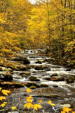 Whitewater stream in fall colors photo