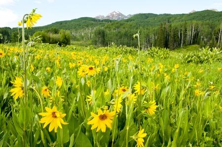 Field of wildflowers photo