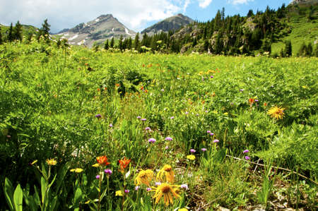 Mountains and field of wildflowers photo