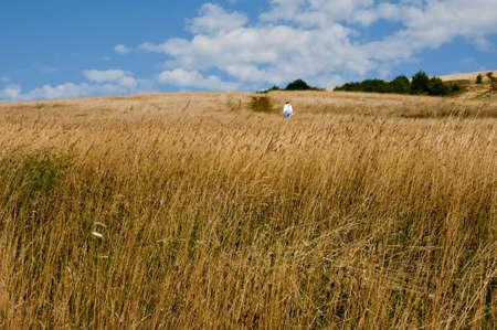 gramineas: Campo de hierba con excursionista