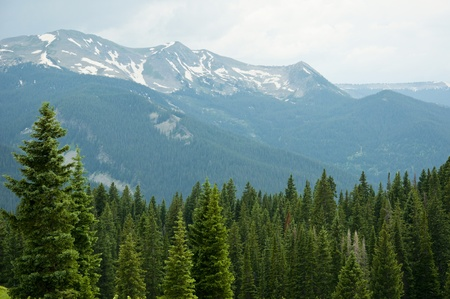 snowcapped: Snow-capped forest and green trees