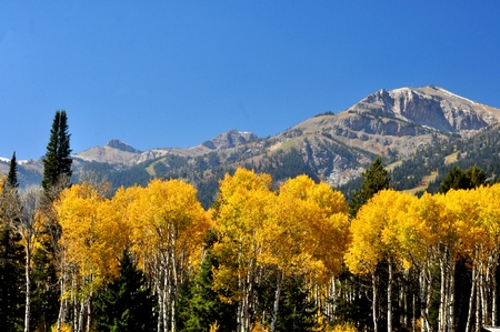 snow capped: Fall colors and snow capped mountains