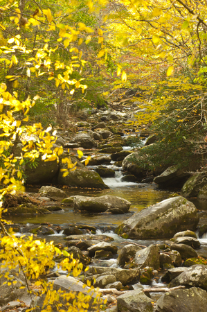 A slow moving stream surrounded with yellow leaves