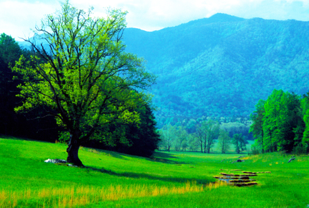 appalachian trail: Spring comes to Cades Cove