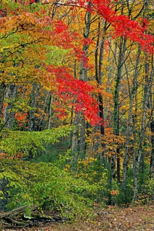 seasons changing: Cambiare le stagioni in Great Smoky Mountains