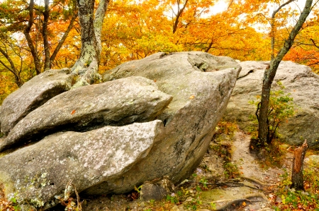 Trees grow from hugh boulders amid fall leaves