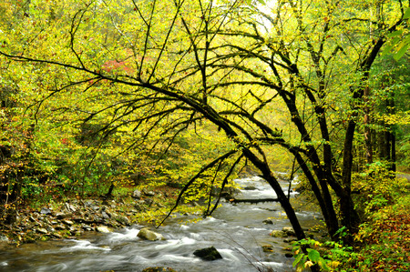 Fall leaves surround a slow white water stream  photo