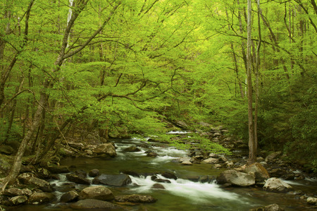 Spring comes to The Great Smoky MOuntains in Greenbriar  photo