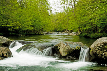 cascade range: In the Great Smoky Mountains, a small stream in spring time  Stock Photo
