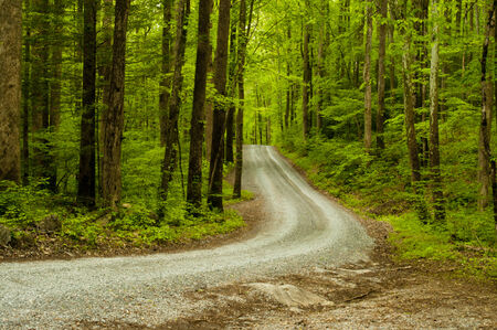 A curvy mountainous road in the Great Smoky Mountains  photo