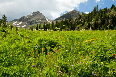 capped: Wildflowers and snow capped mountain in Colorado  Stock Photo