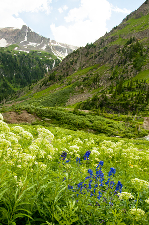 snow capped: Vertical wildflowers beneath snow capped mountains  Stock Photo