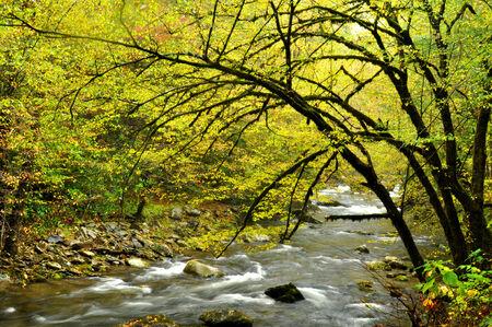 White water stream in fall. photo