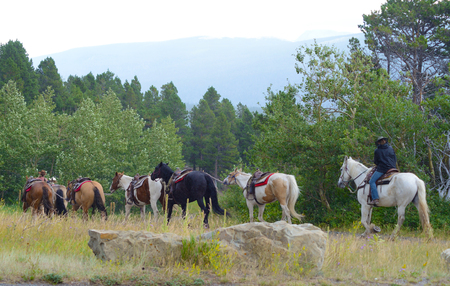Horses on a trail in Glacier National Park. photo