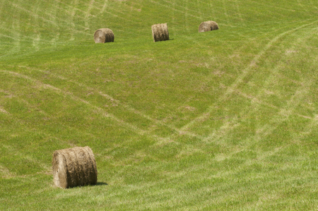 Round hay bales in a fresh field. photo