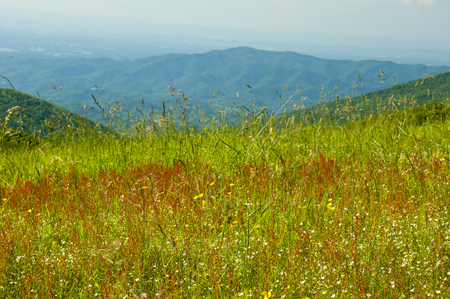 Wildflowers in bloom in the Great Smoky Mountains. Stock Photo