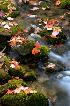 the smokies: Fallen leaves and white water closeup in the Smokies.