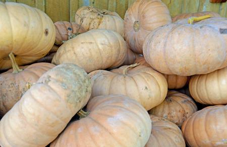 Close-up pile of field pumpkins. photo