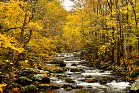 newfound gap: Fall stream in the Great Smoky Mountains.