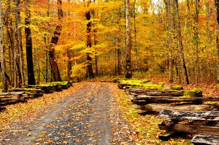 split rail: Fall mountain road framed with split rail fence.
