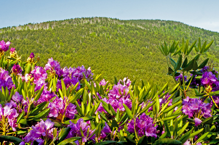 bluff: High mountain bald and rhododendron on Roan Mt. Stock Photo