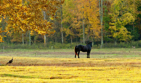 great smokies: Turkey watching a horse while horse watches a deer. Stock Photo